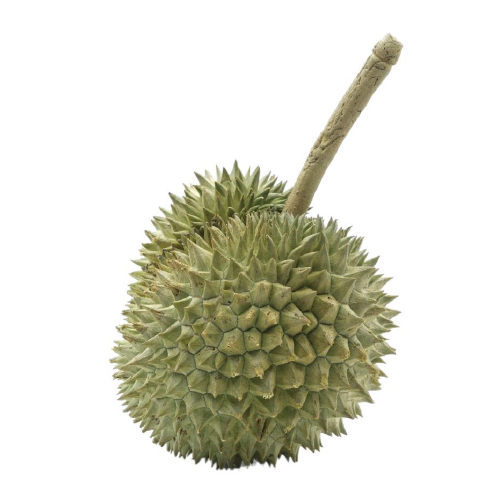 DURIAN CHANEE