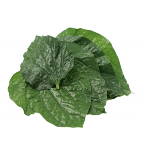 BETEL PEPPER LEAVES